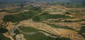 hutan-kalimantan-yang-telah-gundul-karena-penebangan-liar-_110927101410-768